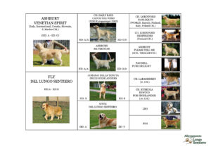 PEDIGREE CLOE DEL LUNGO SENTIERO GOLDEN RETRIEVER