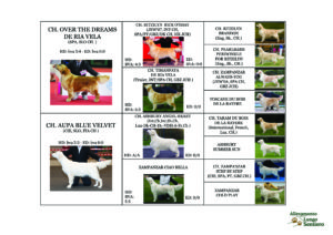 PEDIGREE GIO AUPA SPACE ODISSEY GOLDEN RETRIEVER